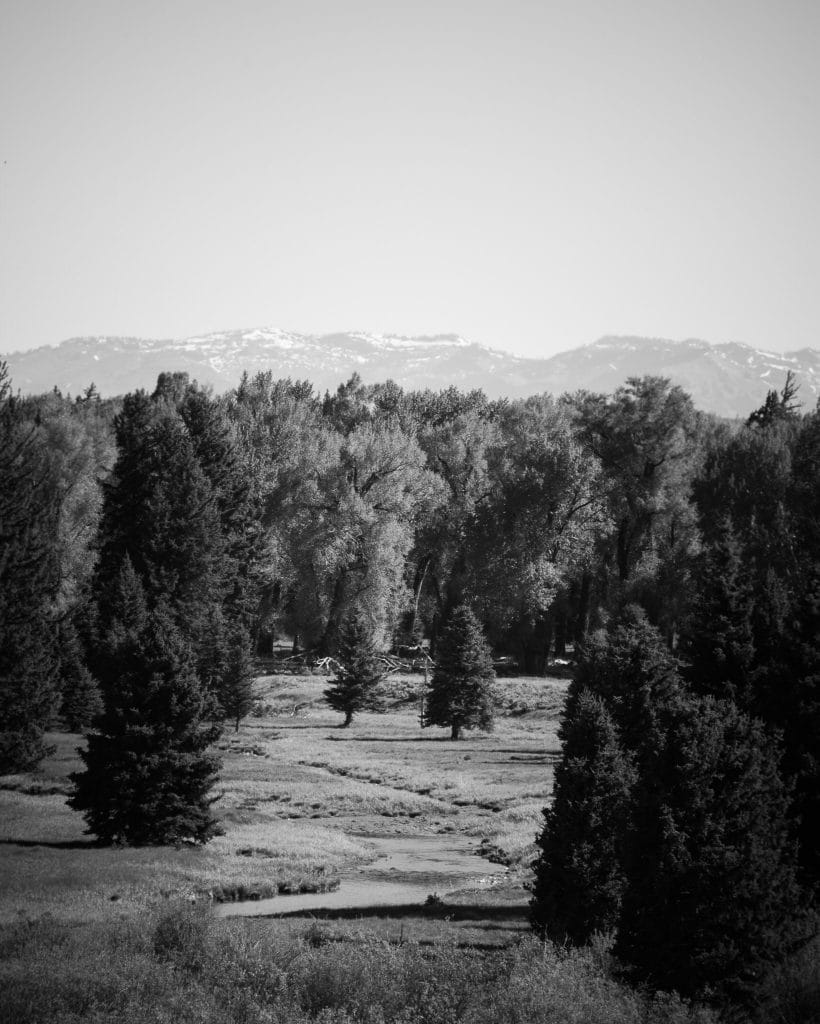 trees-mountainous