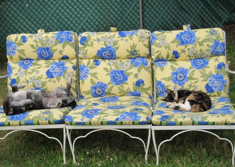 Snapshot: The cat and the dog