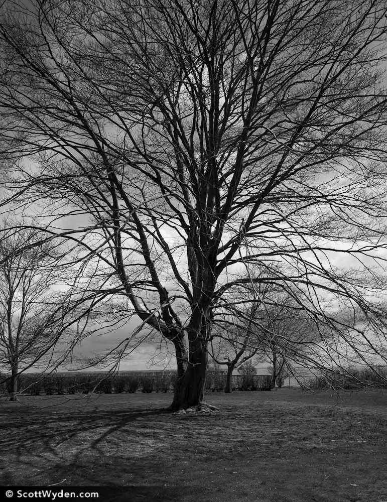 leica-m9-tree-black-white